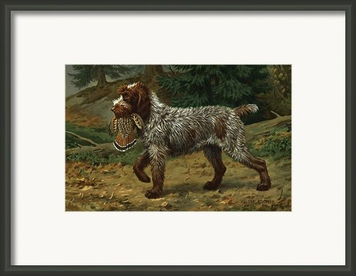 A Wire-haired Pointing Griffon Holds Framed Print By Walter A. Weber