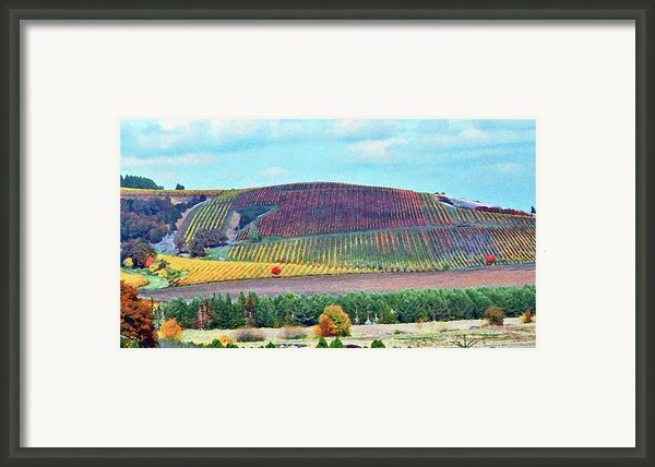 A Yamhill Co. Vineyard Framed Print By Margaret Hood