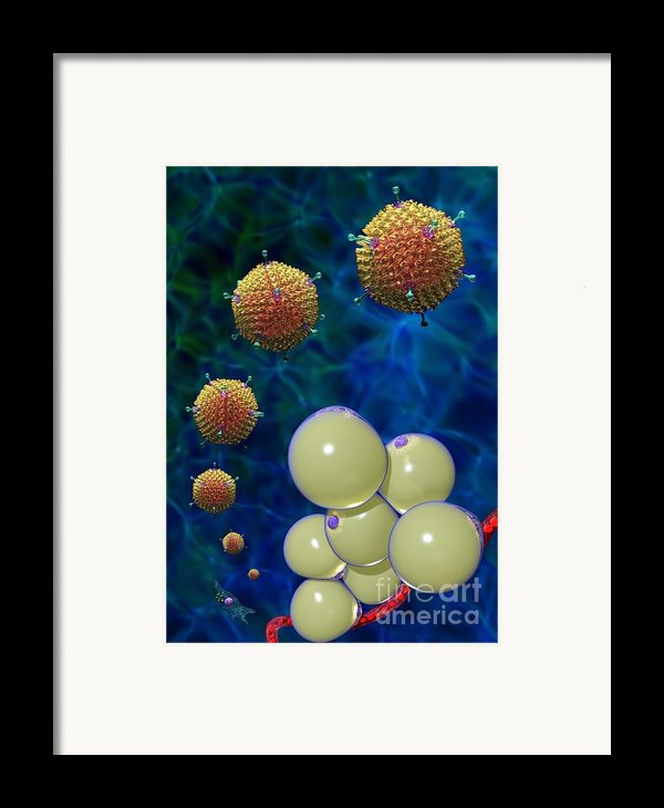 Adenovirus 36 And Fat Cells Framed Print By Russell Kightley