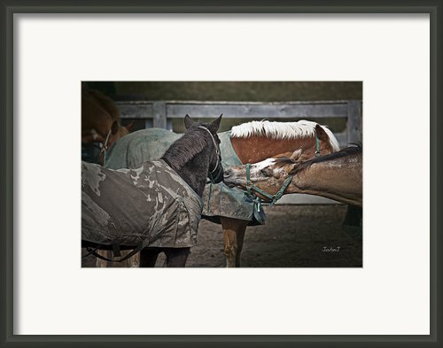 Affection Framed Print By John Jeevaratnam