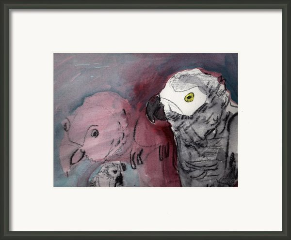 African Gray Dilemma Framed Print By Brad Wilson