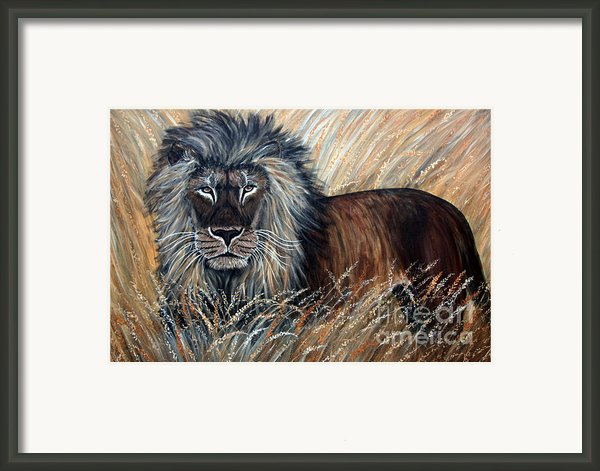 African Lion 2 Framed Print By Nick Gustafson