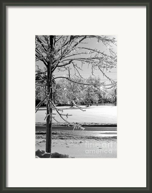 After The Ice Storm Framed Print By Lila Fisher-wenzel