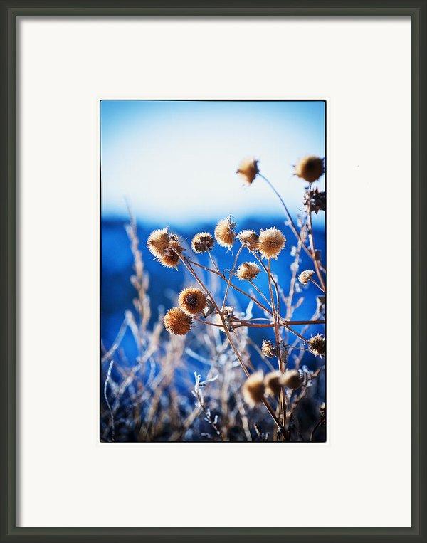 Against The  Blue Sky Framed Print By Lisa  Spencer