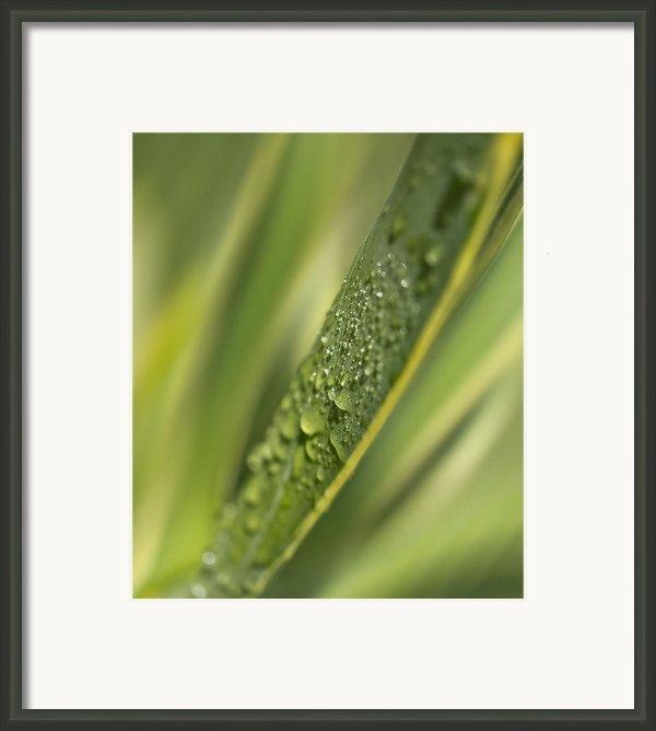Agava Framed Print By Mariola Szeliga