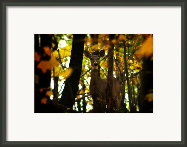 Alert Doe Framed Print By Scott Hovind