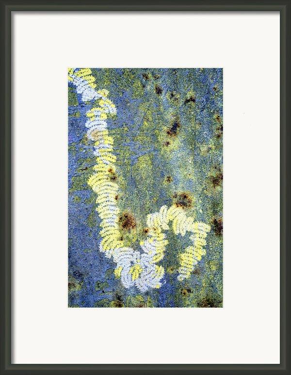 Algae Framed Print By Dr Keith Wheeler