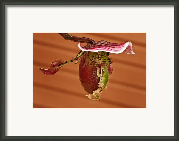 All Aboard Framed Print By Jean Noren