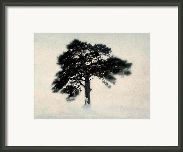 All In White Framed Print By Julie Hamilton