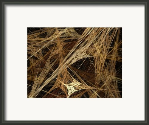 Almond Framed Print By Amanda Schambon