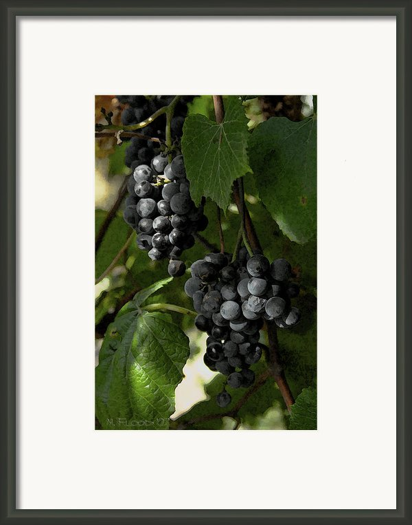 Almost Harvest Time Framed Print By Michael Flood