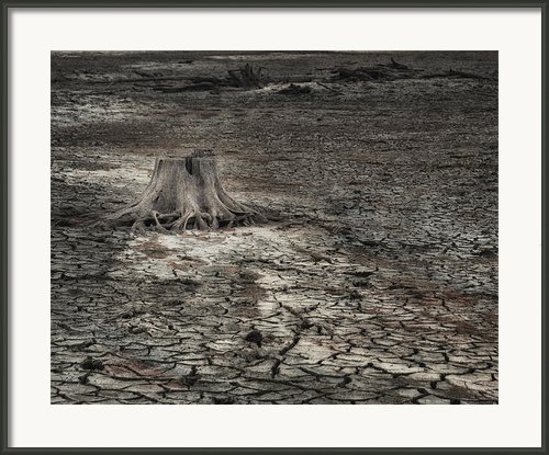 Alone Framed Print By Brenda Bryant