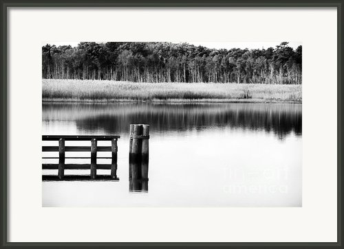 Alone In The Pine Barrens Framed Print By John Rizzuto