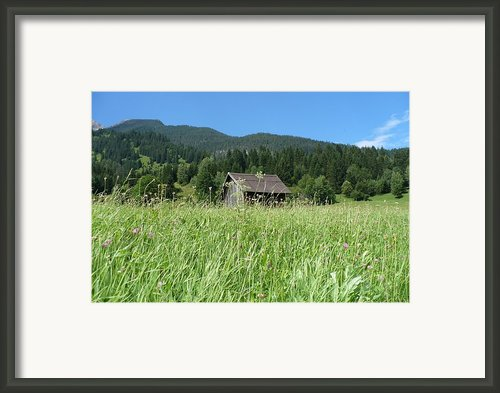 Alpine Meadow  Framed Print By Carol Groenen