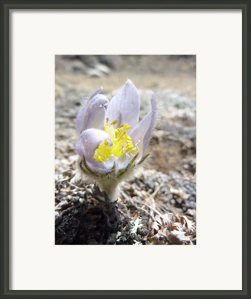 Alpine Purple Framed Print By Estephy Sabin Figueroa