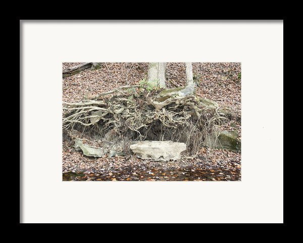 Altar To Nature Framed Print By James Collier