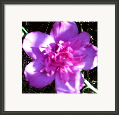 Althea Framed Print By Saywood Samen