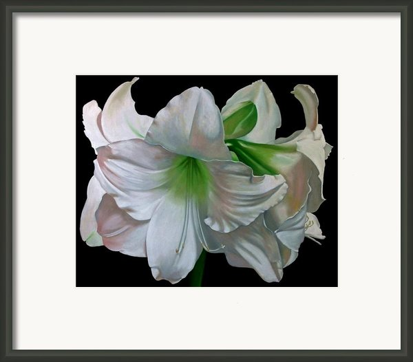 Amaryllis Framed Print By Doug Strickland