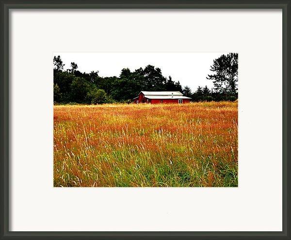 Amber Waves Framed Print By Kevin D Davis