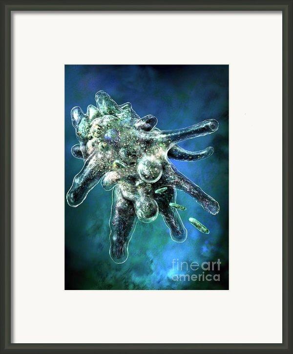 Amoeba Blue Framed Print By Russell Kightley