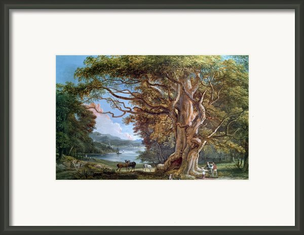 An Ancient Beech Tree Framed Print By Paul Sandby
