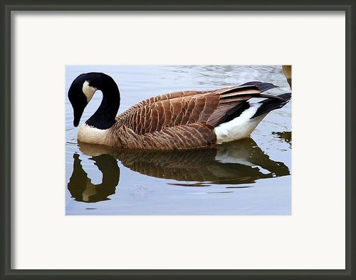 An Elegant Pose Framed Print By Robert Harmon