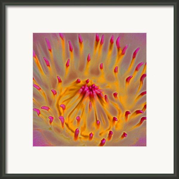 An Inner Glow Framed Print By Kerri Ligatich