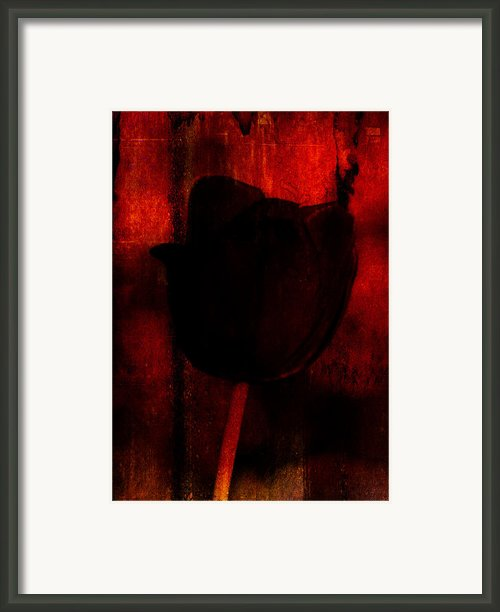 And Venus Rose Red Out Of Wine Framed Print By Rebecca Sherman