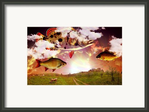 Angel Fish Framed Print By Mark Ashkenazi
