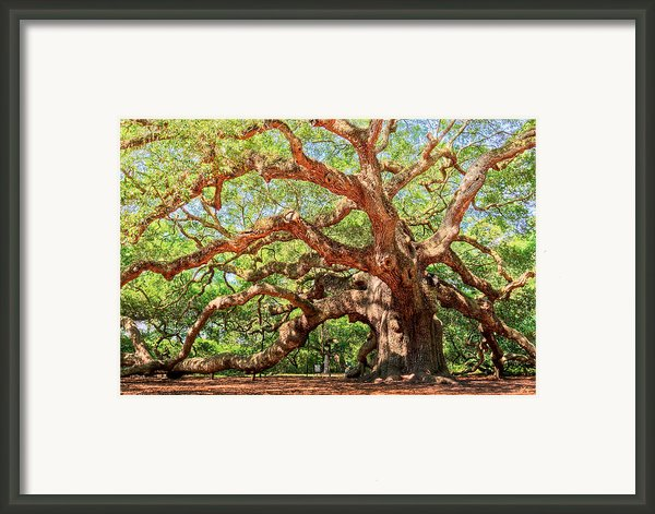 Angel Oak - Charleston Sc  Framed Print By Drew Castelhano