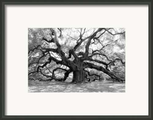Angel Oak  Framed Print By Sabrina  Hall