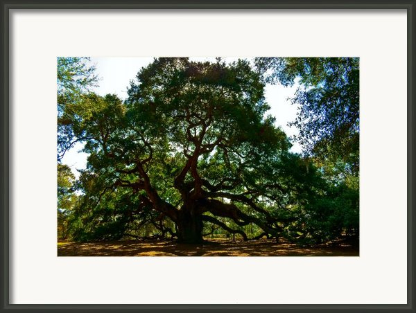 Angel Oak Tree 2004 Framed Print By Louis Dallara