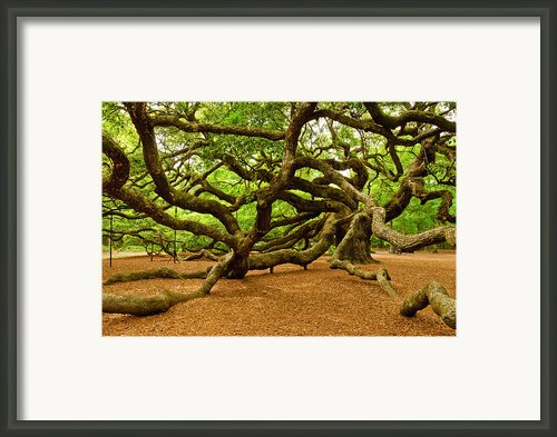 Angel Oak Tree Branches Framed Print By Louis Dallara