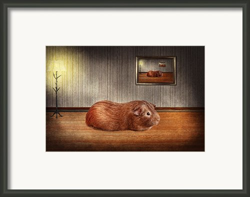 Animal - The Guinea Pig Framed Print By Mike Savad