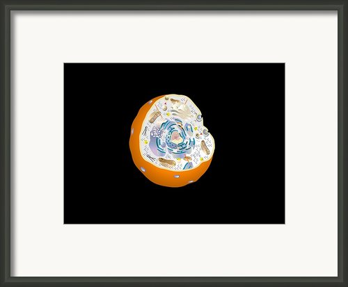 Animal Cell Anatomy, Artwork Framed Print By Francis Leroy, Biocosmos