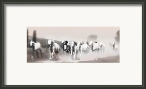 Arabian Mares - Home Run  Framed Print By El Luwanaya Arabians