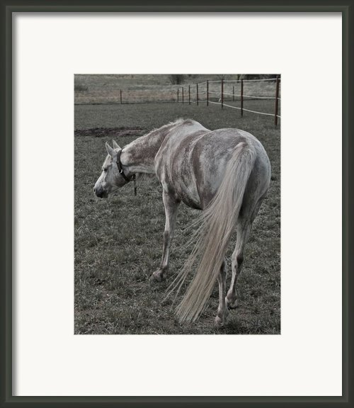 Arabian Framed Print By Odd Jeppesen