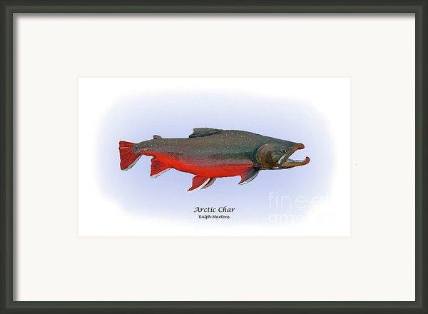Arctic Charr Framed Print By Ralph Martens