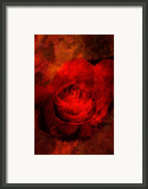 Art Rose Framed Print By Martin  Fry