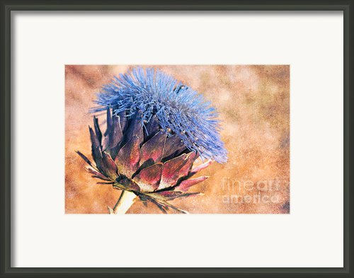 Artichoke In Bloom Framed Print By Wenata Babkowski