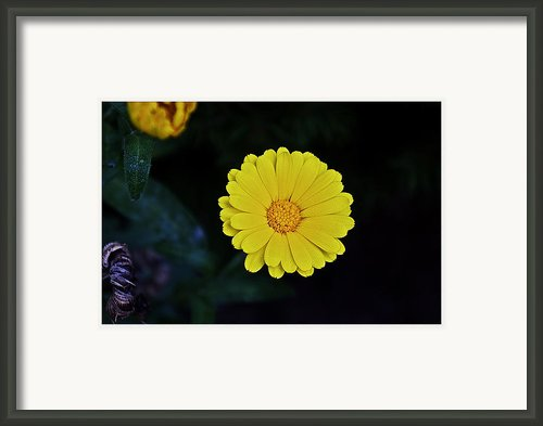 Artwork Of The Nature For A Moment Framed Print By Axko Color De Paraiso