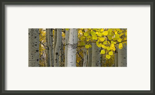 Aspen Panorama Framed Print By Andrew Soundarajan