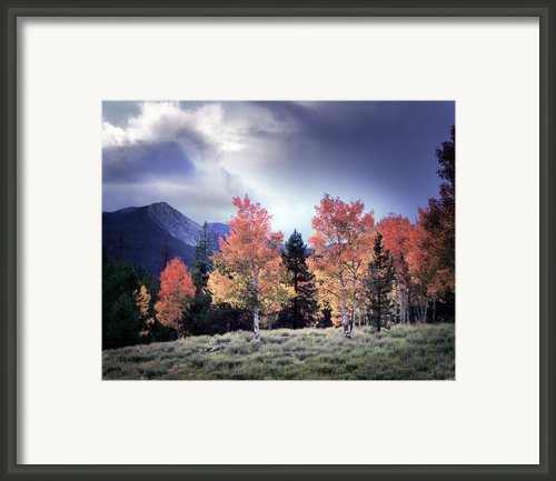 Aspens In Autumn Light Framed Print By Leland Howard