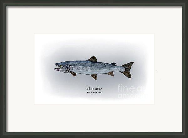 Atlantic Salmon Framed Print By Ralph Martens
