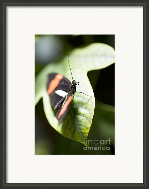 Attention Framed Print By Leslie Leda