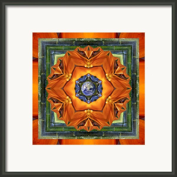 Aura Bamboo Framed Print By Bell And Todd
