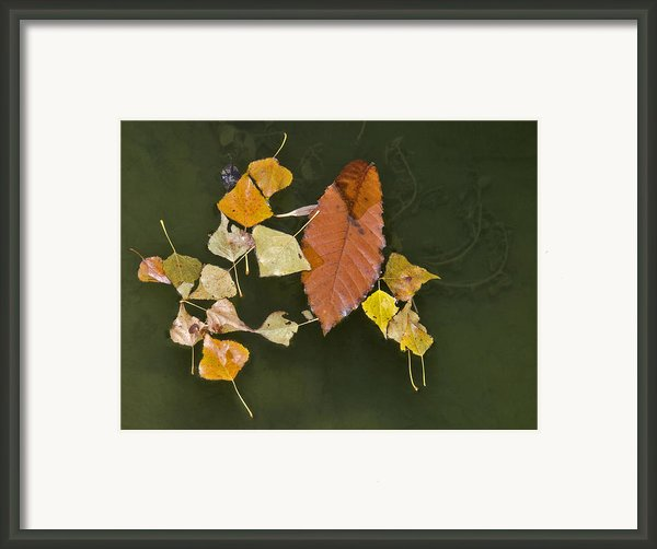 Autumn 1 Framed Print By Kenton Smith