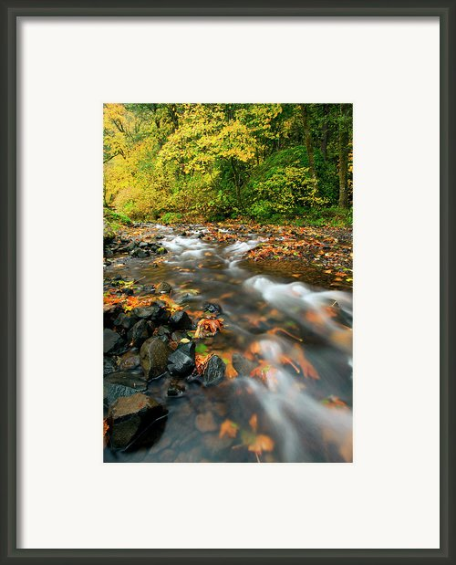 Autumn Beneath Framed Print By Mike  Dawson