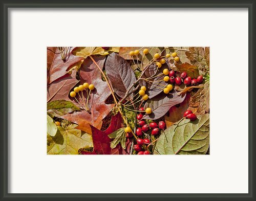 Autumn Berries And Leaves Background  Framed Print By Aleksandr Volkov