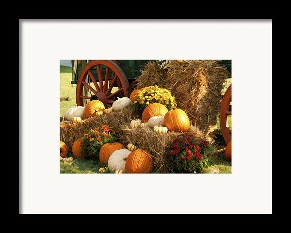 Autumn Bounty Framed Print By Kathy Clark